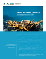Hurricane damages to reefs, repair and restoration options and costs.