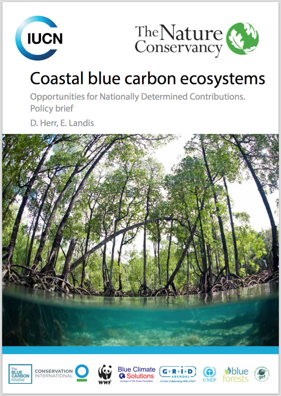 Coastal and island countries have an opportunity to take their blue carbon ecosystems into account when considering their national level climate actions.